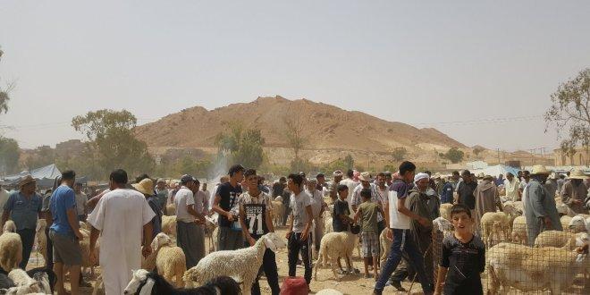 أجواء سوق المواشي ببوسعادة قبل يوم من عيد ألآضحى المبارك … صور