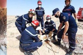 وحدة الحماية المدنية لبن سرور تنقذ حيوان ( كلب ) سقط في بئر تقليدي