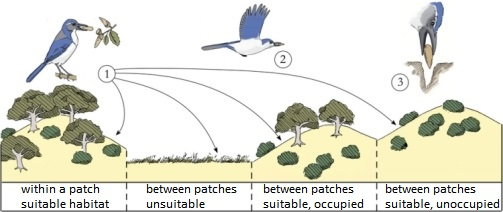 lab tree diagram 7 3l glow plug wiring seed dispersal by scatter-hoarding corvids - british ornithologists' union ...