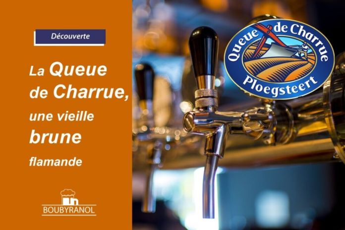 La Queue de Charrue, vieille Brune flamande !