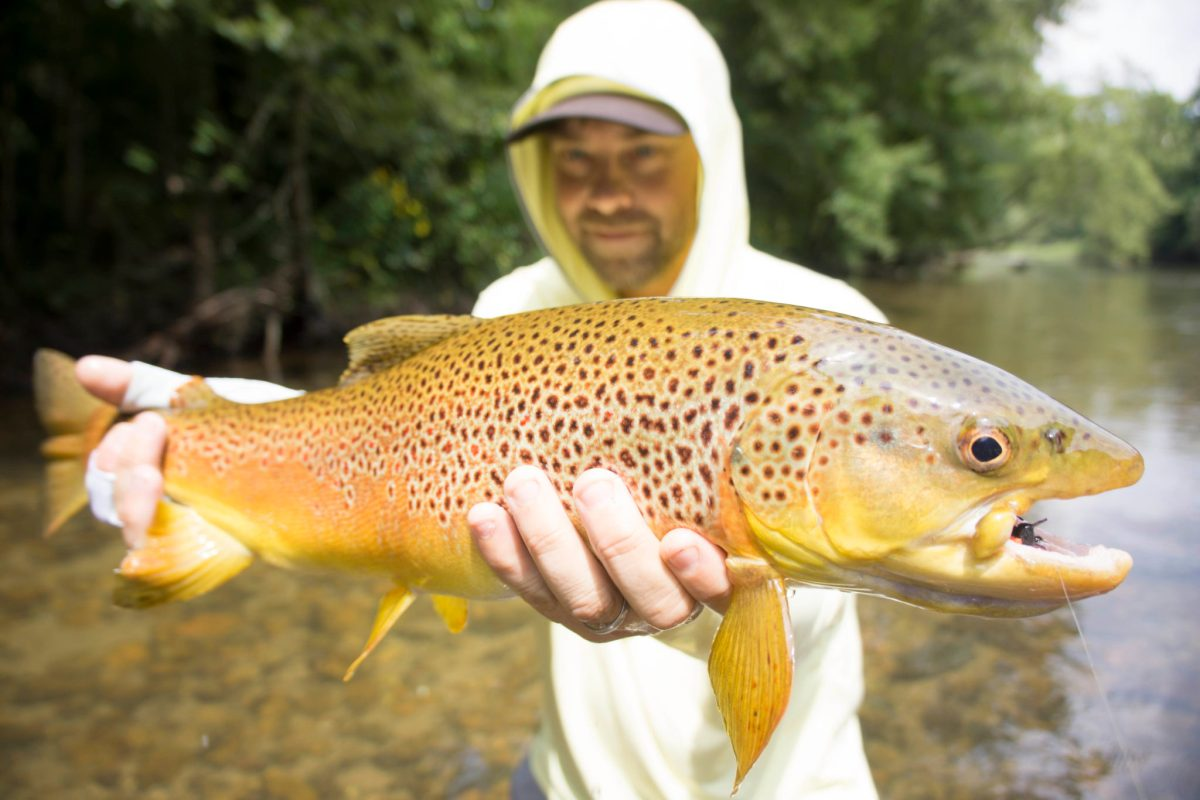 Asheville fly fishing company: brown trout fishing guides