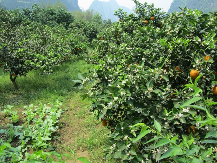 Hiking Along the Li River - Yangshuo - Orange Grove