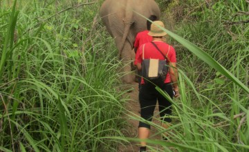 Walking with Jokia and Mae Perm to Elephant Haven