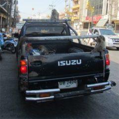 Monkeys in a pickup truck in Lopburi