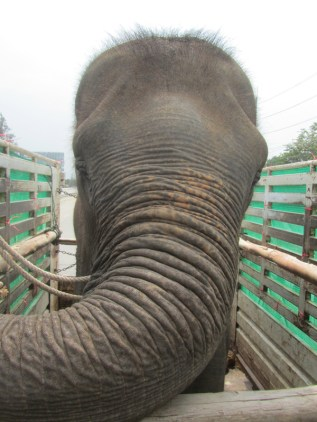 Lucky on the elephant rescue truck