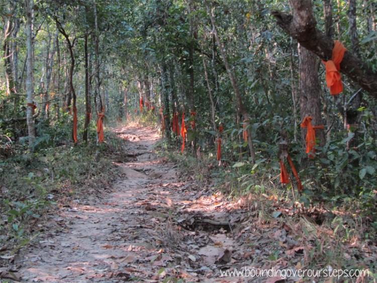 Monk cloth wrapped around trees on the hike to Wat Phra Doi Suthep