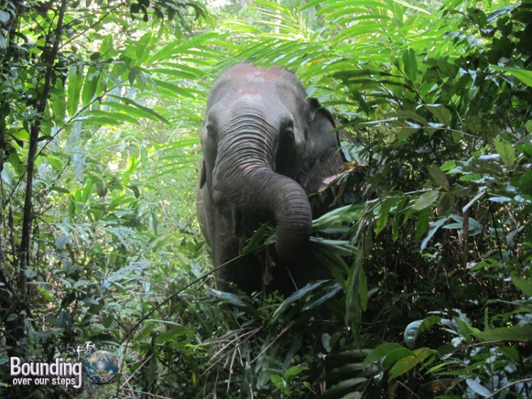 Kham Lin on her elephant walk enjoying young palm trees in the jungle