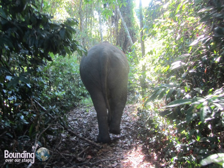 A view of Kham Lin from behind during the elephant walk