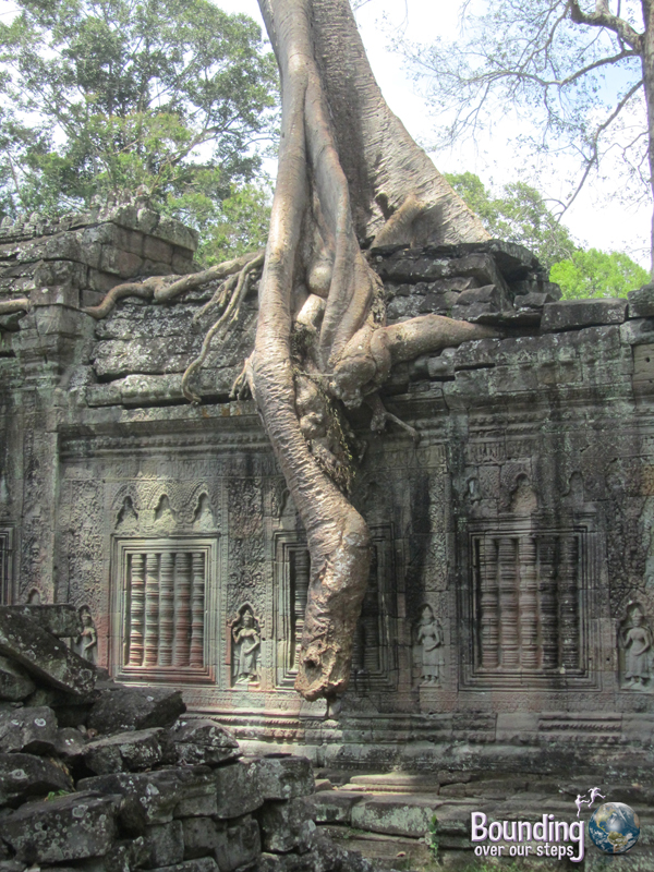 Great roots of a banyan tree overgrowing Ta Prohm Temple in Angkor Wat, Cambodia