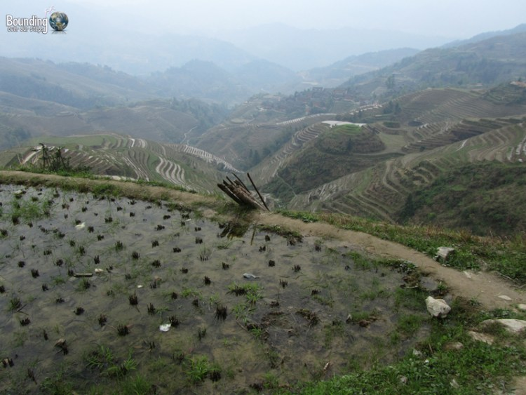 View of the Dragon's Backbone Rice Terraces