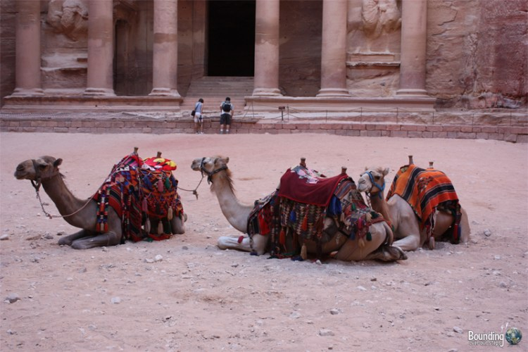 Camels waiting in front of the Treasury at Petra