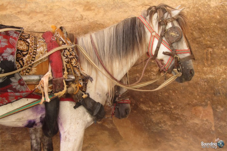Horses with visible wounds at Petra