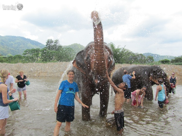 Things to do in Chiang Mai - Visit Elephant Nature Park