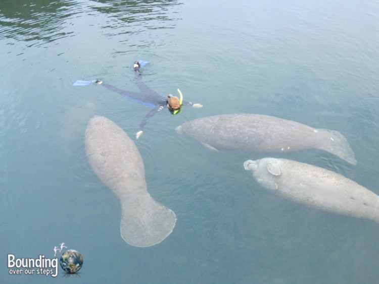 Miss About Florida - Swimming with Manatees