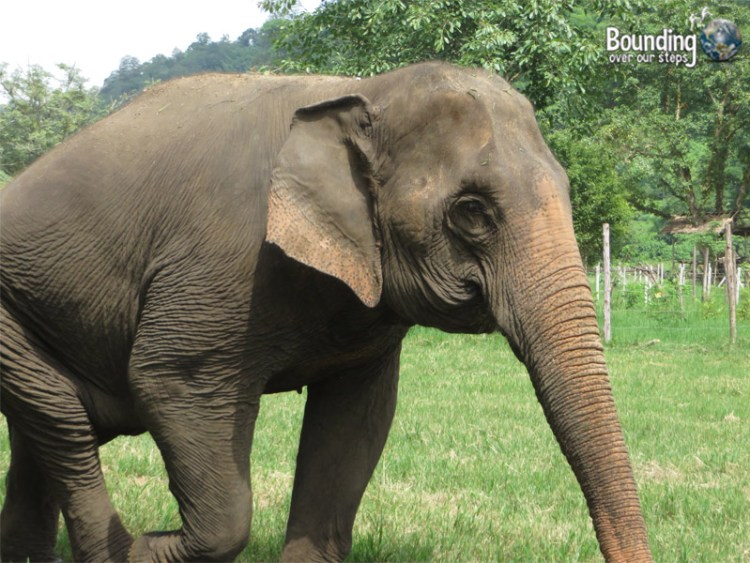 Elephant Lesbians - Tilly and Mae Kham Puan - Meet Tilly