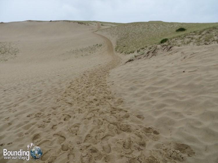 Provincetown Sand Dunes - Dunes
