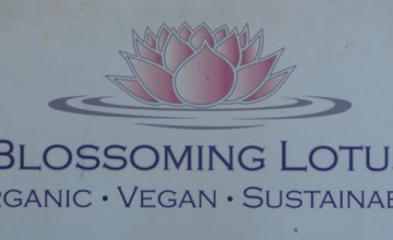 Blossoming Lotus Vegan - Featured