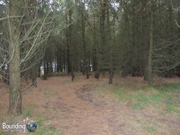 Woods on the Killaspugbrone Loop