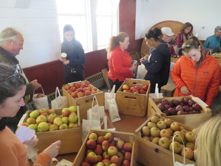 Apple Tasting in Vermont - Heirloom Apples