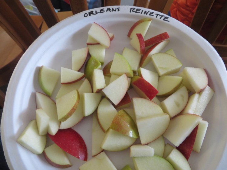 Apple Tasting in Vermont - Orleans Reinette