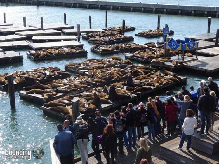 Free Things in San Francisco - Pier 39
