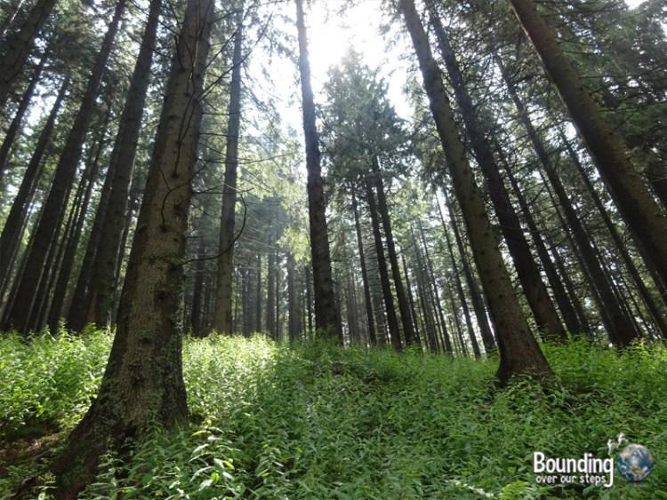 Zakopane - Polish Alps - Nosy Hike Trees