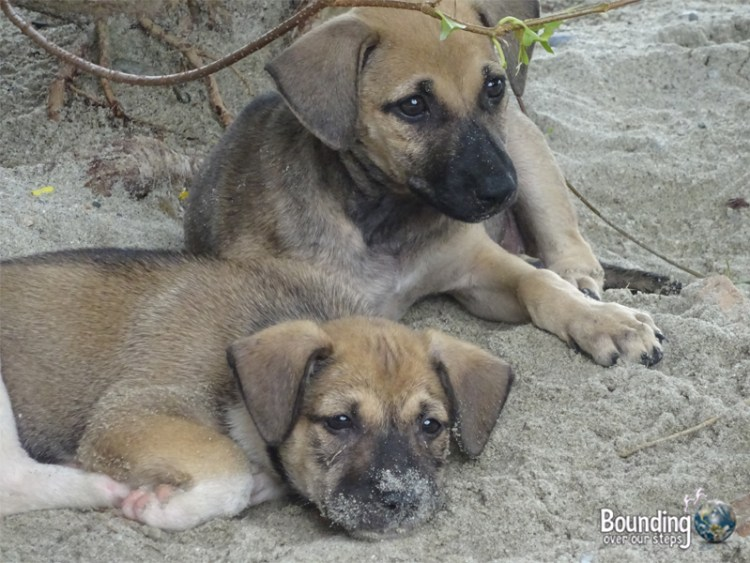 Travel from Manila to Puerto Galera - Puppies