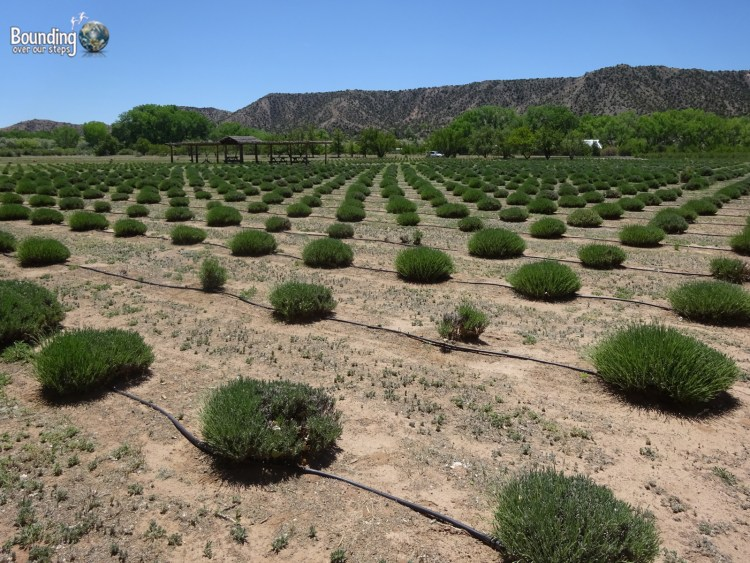 Vegan in Northern New Mexico - Purple Adobe Lavender Farm