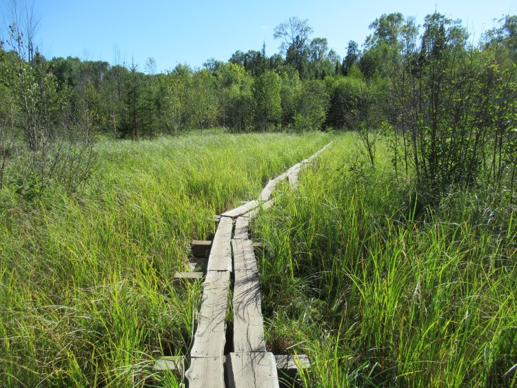A portage trail in the Boundary Waters Canoe Area (BWCA)