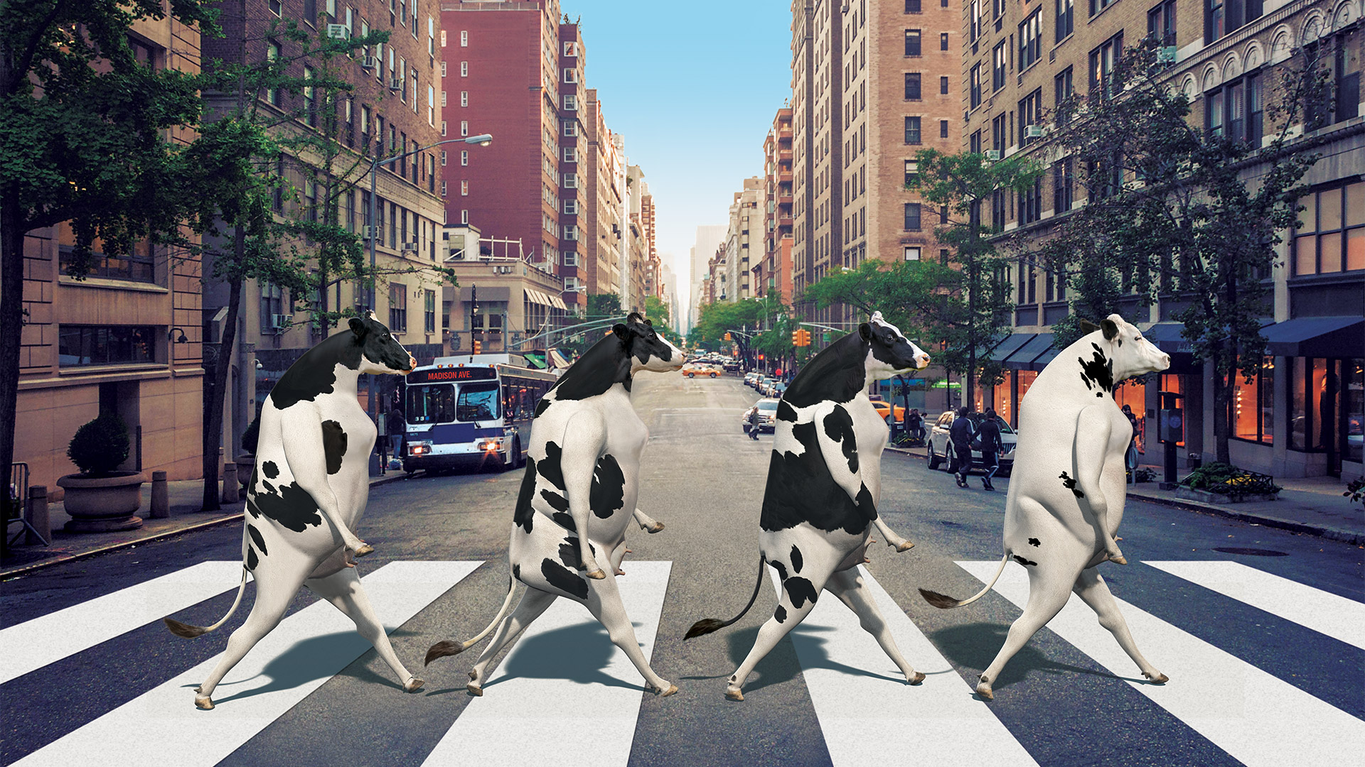 Abbey_Road_Cows.jpg