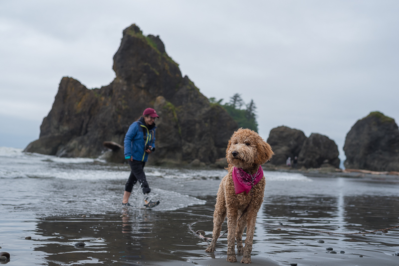 Dog at Ruby Beach on the Washington Coast in Olympic National Park on the Olympic Peninsula.