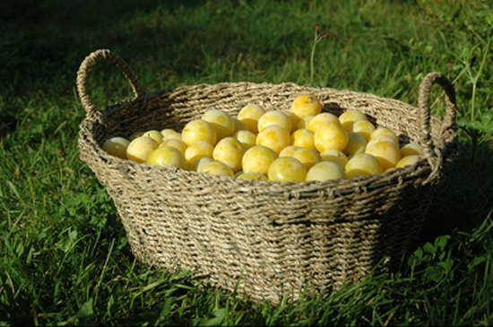 yoga, plums, healthy eating, diet, clean, weight loss