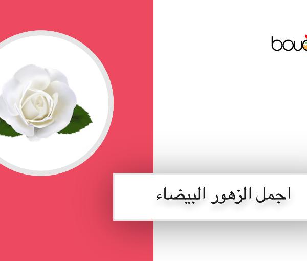 أسماء اجمل الزهور البيضاء