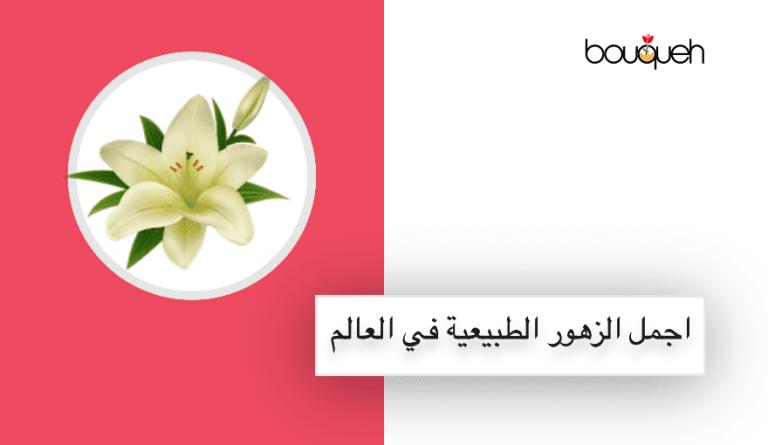أنواع اجمل الزهور الطبيعية المتحركة والرمانسية في العالم بالصور