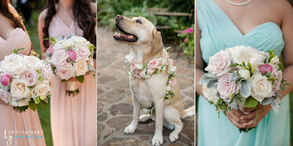 Dog with floral collar.
