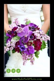 Burgundy purple fuchsia orchid anemone