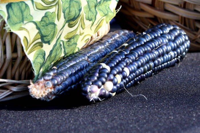 blue_corn-f6756b8bbf7864c05219787a624b45d6a94f9cf6