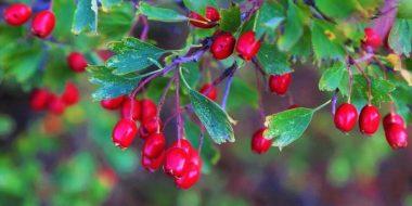 turkey cranberry delights