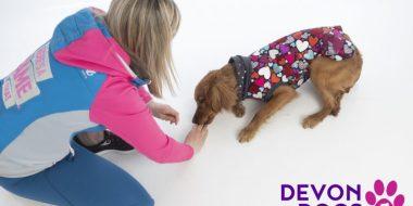 love dog training