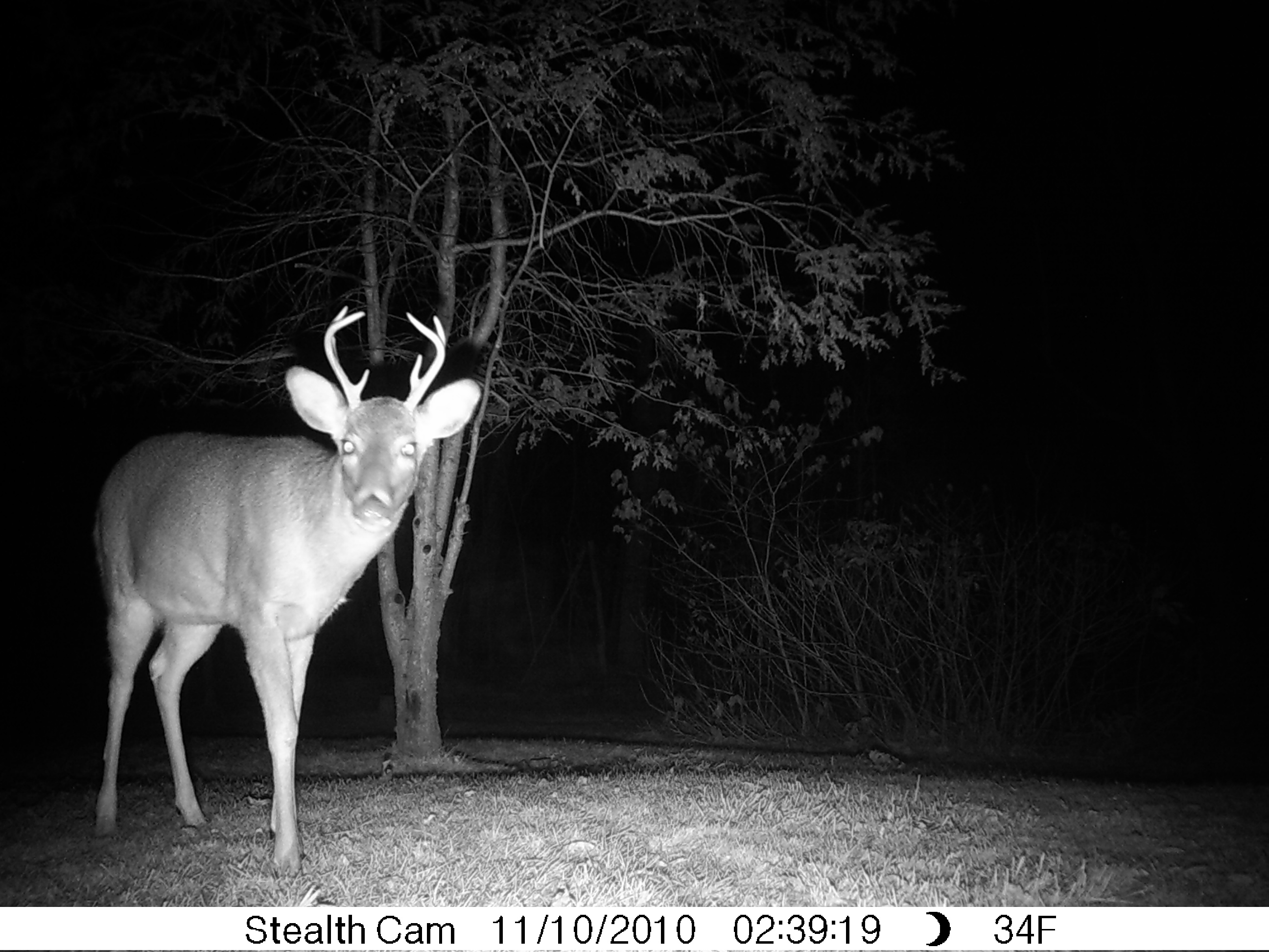 Small 8 Point Buck