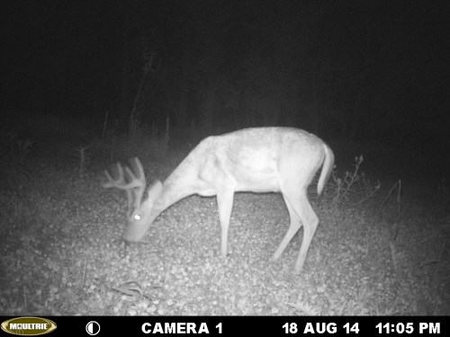 Small 8 Point 8/18/2014