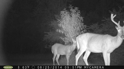 2 - 8 Point Bucks 8/25/2014