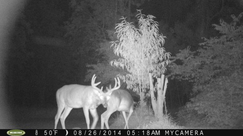 Big 8 Point Buck 8/26/2014