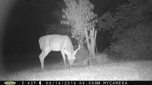 Small 8 Point 9/14/2014
