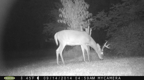 Tall 8 Point 9/14/2014