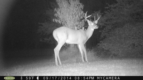 Wide 8 Point 9/17/2014