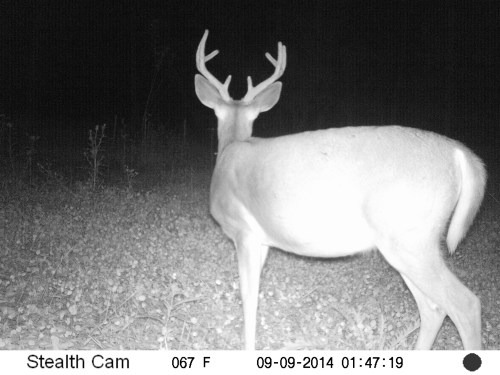 Small 8 Point Buck 9/9/2014