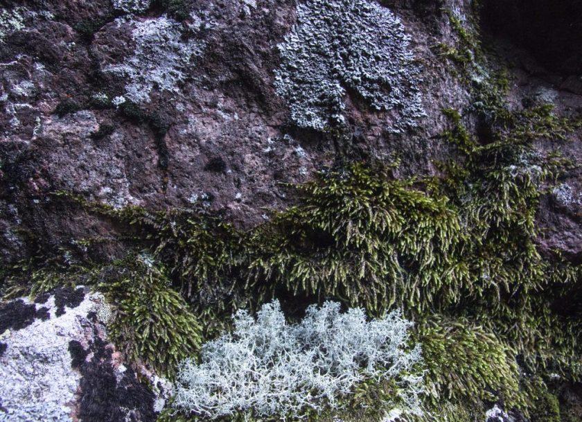 Mossor och lavar trivs på Slåttdalsskrevans stenväggar.