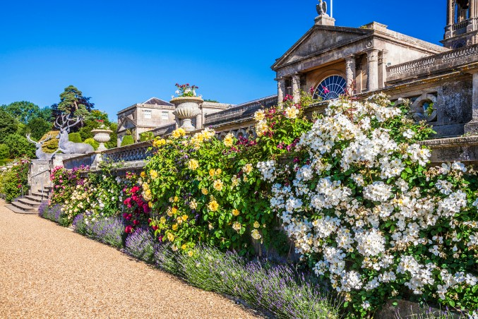 Several different coloured rose bushes below the terrace with Bowood House in the background
