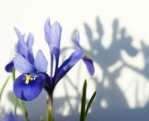 Easy Bulbs for Spring Colour - Garden Workshop